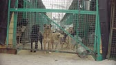 bondade : Dogs in aviary in a dog shelter