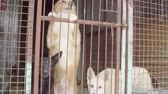 dakloze : Dogs in aviary in a dog shelter
