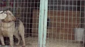 nazik : Thick dog in aviary in a dog shelter