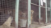 vagabundo : Dogs in aviary in a dog shelter
