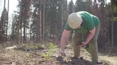 segít : Senior volunteer plants a small fir-tree Stock mozgókép