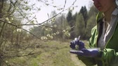 sauce : Ecologist getting samples of willow flowers Archivo de Video