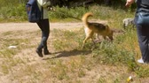 pet friend : Two volunteers with the dogs on a leashes Stock Footage