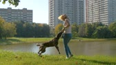 fiel : Young female playing with the dog Stock Footage