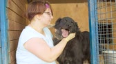 лохматый : Shaggy mongrel dog glad to visitor shelter. Woman volunteer caress a dog in a shelter Стоковые видеозаписи