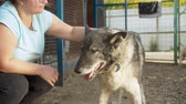 лохматый : Woman volunteer caress a dog in a shelter