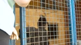 лохматый : Volunteer closes the cage and the dog is left alone