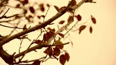 novembro : Vintage moving autumn leaves