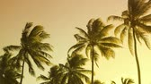 фрукты : Vibrant colors moving with the wind palm trees summertime sunset landscape.