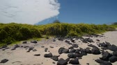 no people : Beautiful beach landscape in Galapagos Island with no people, natural environment of plants and rocks next to sea shore. POV steady cam shot Stock Footage