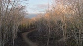 ramo : Dry forest landscape on sunny day, empty hiking path with tree branches moving in the wind. Slow tilt up camera movement.