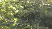breeze : Green tree leaves blowing in the wind. Outdoor slow motion shot on lush tree forest environment. Stock Footage