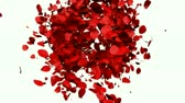 Heart of Rose Petals exploding, Alpha