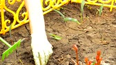 odstranit : Womens hands in gloves loosening rake soil in a flower bed with sprouted flowers, spring work in the garden