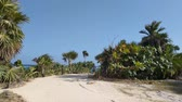 климат : People walking on a sandy trail surrounded by palm trees and clear blue skies. Стоковые видеозаписи