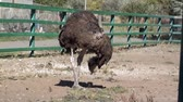 struś : The ostrich hiding its head