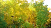 vivid wall : Rise over the yellow forest