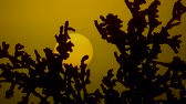 bizarro : Black bushes on the background of the sun Stock Footage