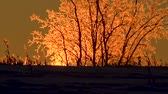 облачность : The sun illuminates the ice trees
