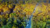 Autos im bunten Wald Stock Footage