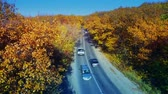 Cars on the road in the yellow forest