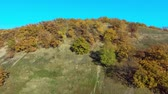 Autumn trees on the top of the hill