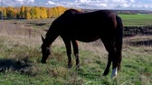 Brown horse grazing grass in a field