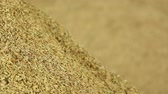 organic : pile of paddy grains