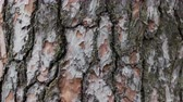 flagstone : Background texture of tree bark in motion on the right Stock Footage