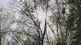 eğreltiotu : The suns rays shine through the branches and leaves of the tree Stok Video
