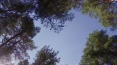 living environment : Trees view from below on the crowns and the blue sky. sunny day