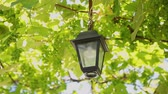maior : The street lamp hangs in the vine. Stock Footage