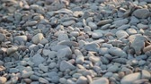 oblázky : Pebbles on the beach close up. Dostupné videozáznamy