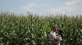 adorável : Loving couple each other standing in a corn field hugging and kissing. Stock Footage