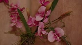 vaso : Pink flowers are in a vase on the shelf.