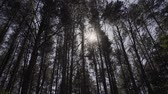 bois : Sun Shining Sunbeams Through Branches And Leaves Of Trees In Pine Forest.Sunbeams Through Wood Leaves in Motion.