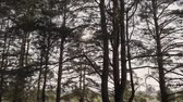 brilhar : Sun Shining Sunbeams Through Branches And Leaves Of Trees In Pine Forest.Sunbeams Through Wood Leaves in Motion. Sun Peaking Through Branches.Sun rays in pine forest steadycam move