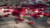 センチメンタル : Red, white, rose flower petals laying on grey asphalt in sunny afternoon.