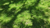 natürliche schönheit : Lawn with green grass and tree shadows on a sunny spring day. Green natural background.