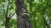 gestion : Parasite mushroom on a tree in the forest.