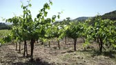 Vignoble en Californie.