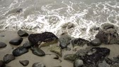 splash park : Small wave breaks over sand and rocks on a shoreline.