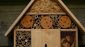 пчела : emerging from nest tubes in an insect hotel Стоковые видеозаписи
