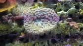 анемон : Colorful underwater plants and fishes in an aquarium