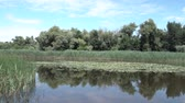 Лилли : Picturesque panorama of a wild lake with water lilies in sunny day Стоковые видеозаписи