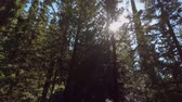 karma : Walking in a forest and filming the sunrays dancing between the tree branches in slow motion Stock Footage