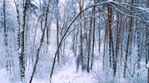 floco de neve : Snowy branches in forest. Winter fairy background Vídeos