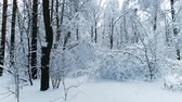 ladin : Snowy branches in forest. Winter fairy background Stok Video