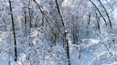 winter tree : Snowy branches in forest. Winter fairy background Stock Footage