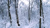 снежинки : Snowy branches in forest. Winter fairy background Стоковые видеозаписи